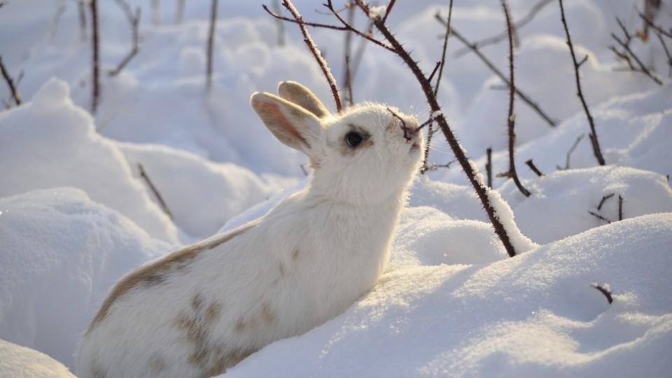 Тепло і вітряно: якою буде погода у Луцьку 17 січня