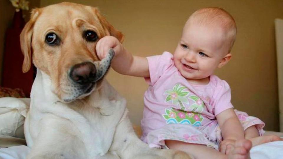 У Луцьку вчаться лікувати тваринами. ВІДЕО
