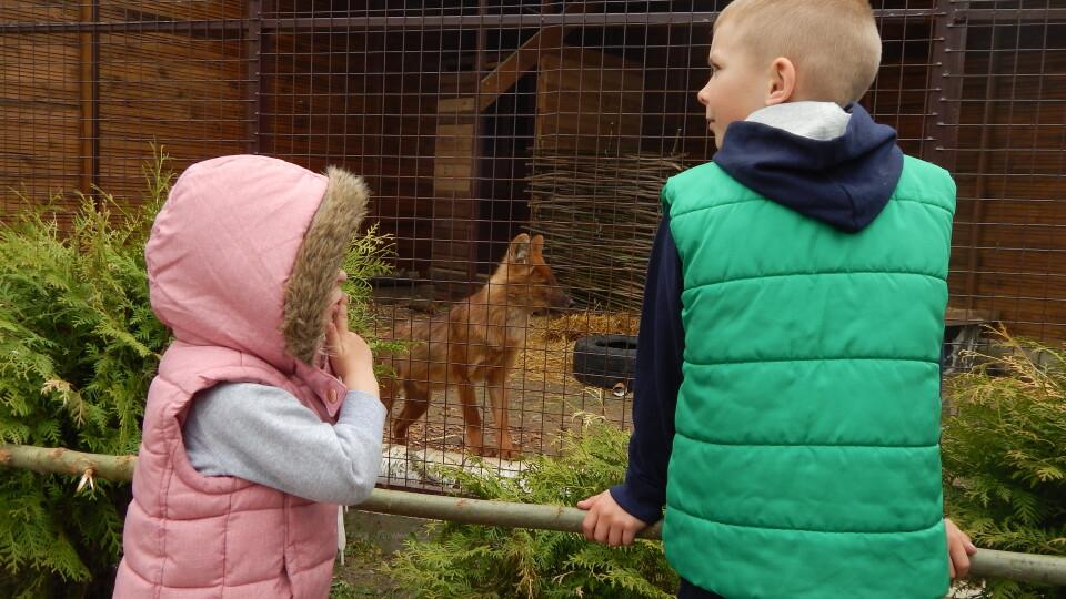У Луцькому зоопарку - червоні вовки з Австрії