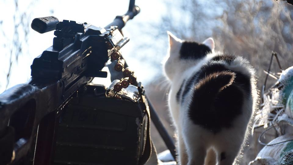Бойові коти: волинські військові показали своїх улюбленців. ФОТО