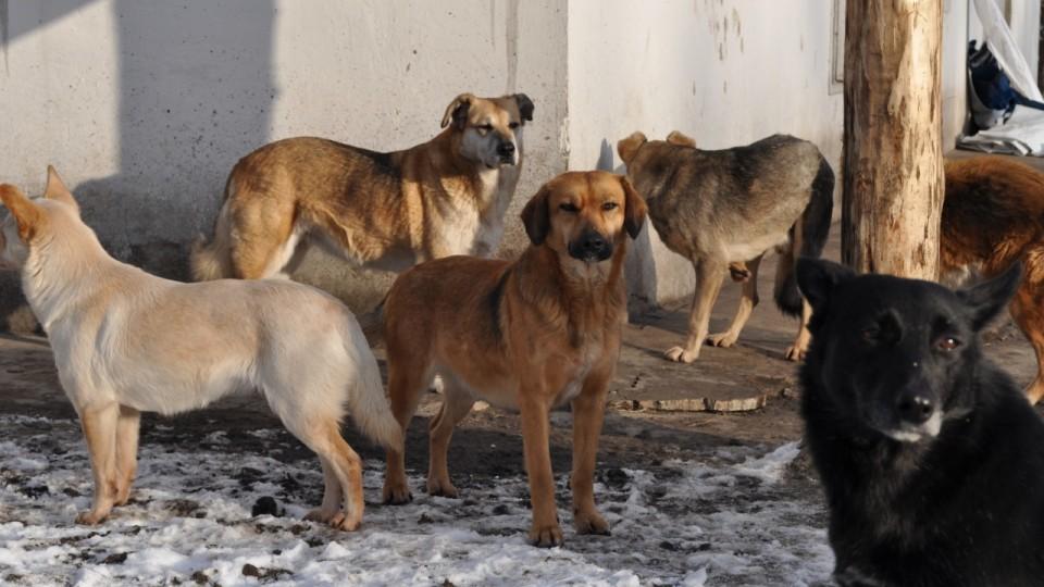 За тиждень – 12 звернень: у Луцьку просять вирішити проблему з безпритульними собаками