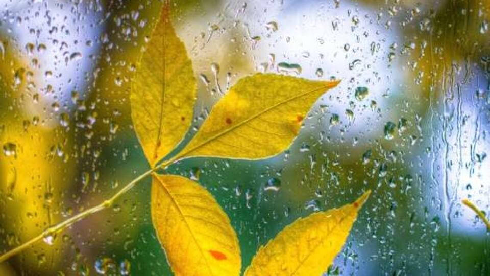 Холод, дощі і трошки бабиного літа. Прогноз на осінь від волинських синоптиків