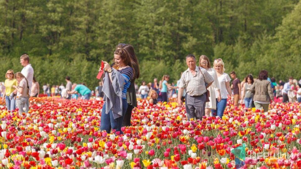 На Волині проведуть фестиваль тюльпанів