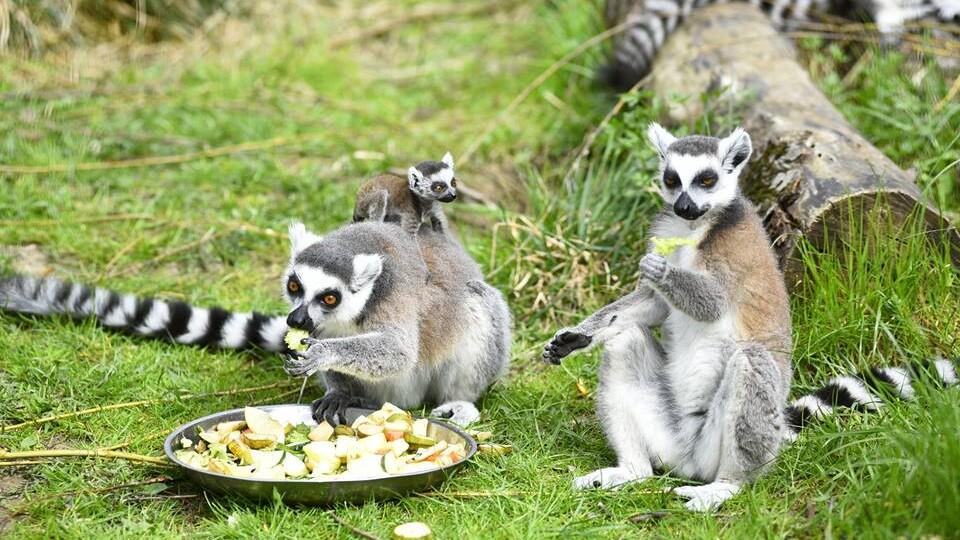 Три причини, чому на вихідних варто піти в Луцький зоопарк