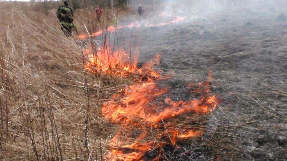На Волині  вщент вигоріло 30 гектарів землі. ФОТО