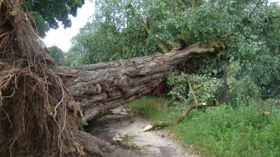 На Волині у двох селах буревій повалив дерева та позривав шифер