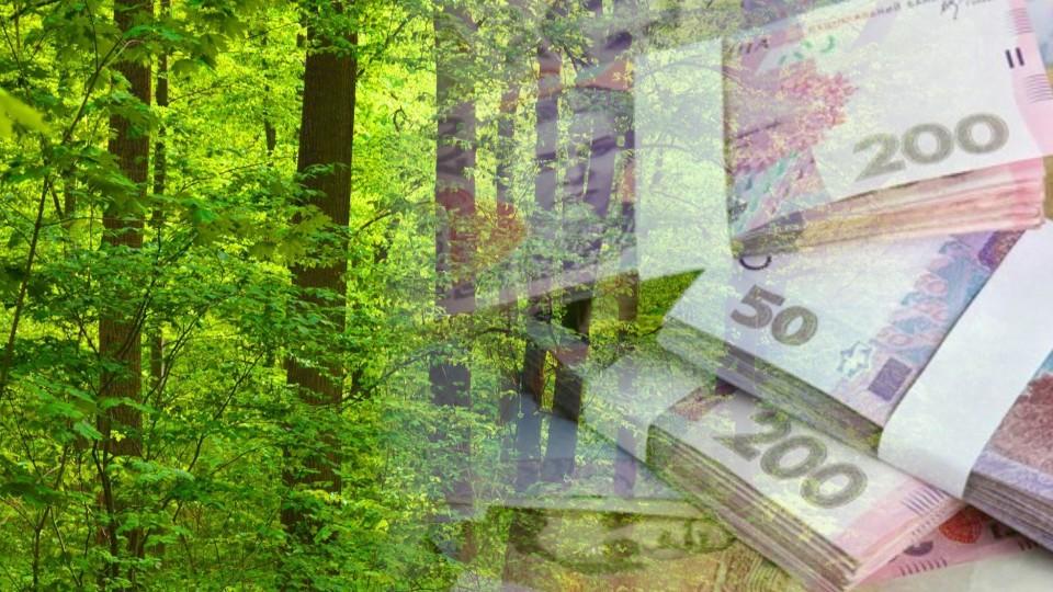 За рік волинські лісівники поповнили бюджети на 325 мільйонів. ВІДЕО