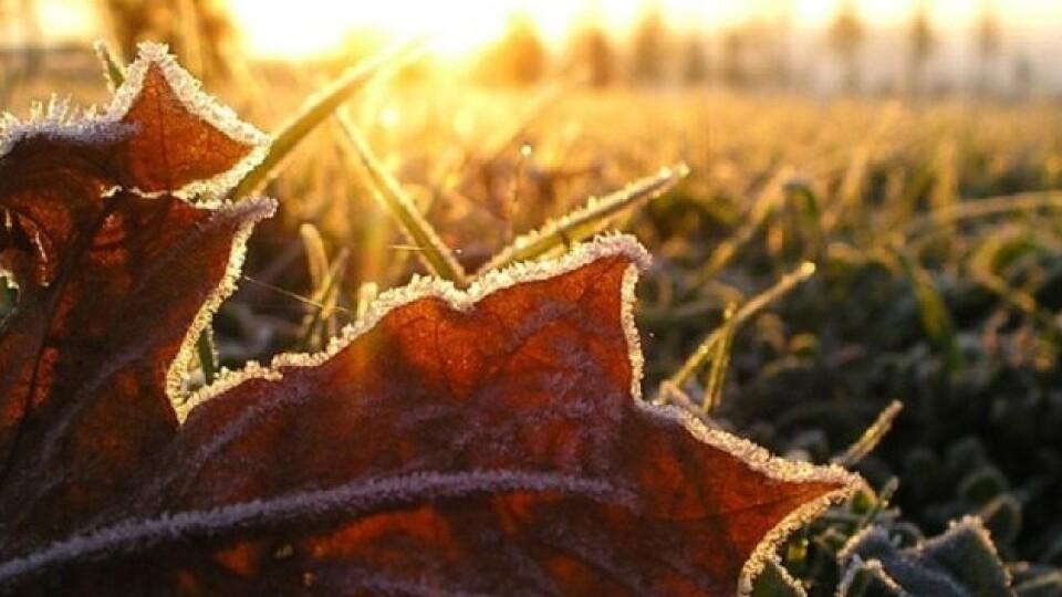 В Україні прогнозують заморозки вже з наступного тижня