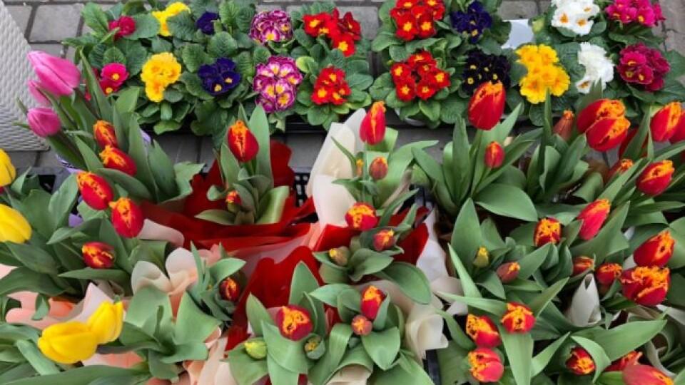 Тюльпани – від 14 гривень, троянди – від 22. Скільки коштують квіти в Луцьку напередодні 8 березня