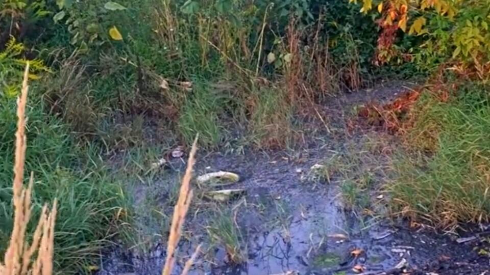 У Луцьку знайшли нове джерело смороду. «Луцькводоканал» каже, що це – просто аварія