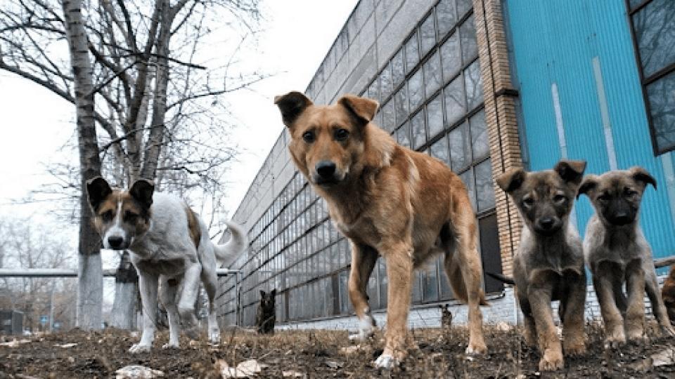 Лучанку оштрафували на 34 гривні за собак, які самі гуляють