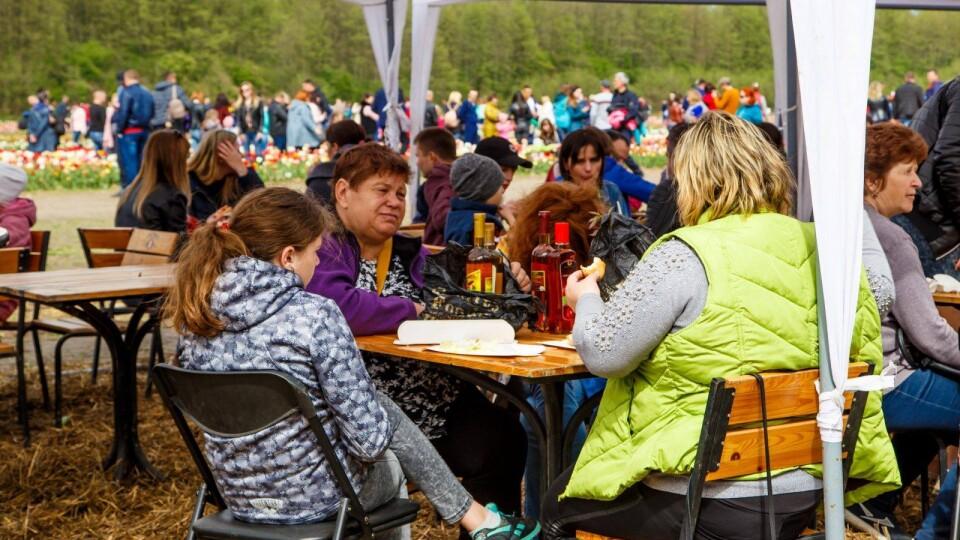 Податкова «наїхала» на фестиваль тюльпанів через медовуху