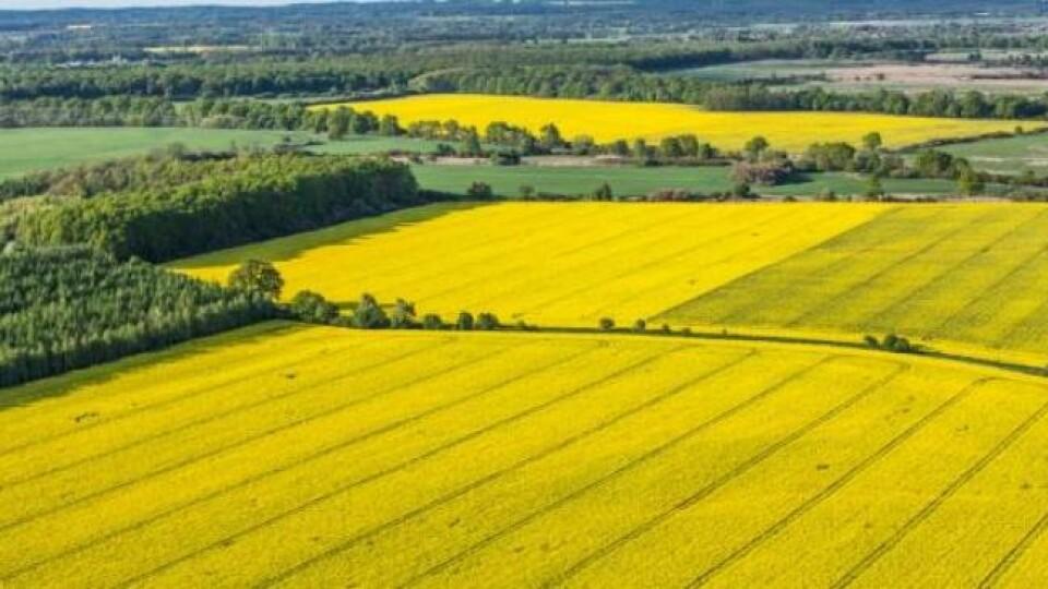 Державі повернули особливо цінні землі Волині, які коштують майже півмільярда гривень