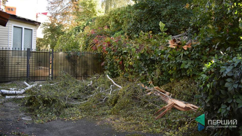 У центрі Луцька звалилося дерево. ФОТО