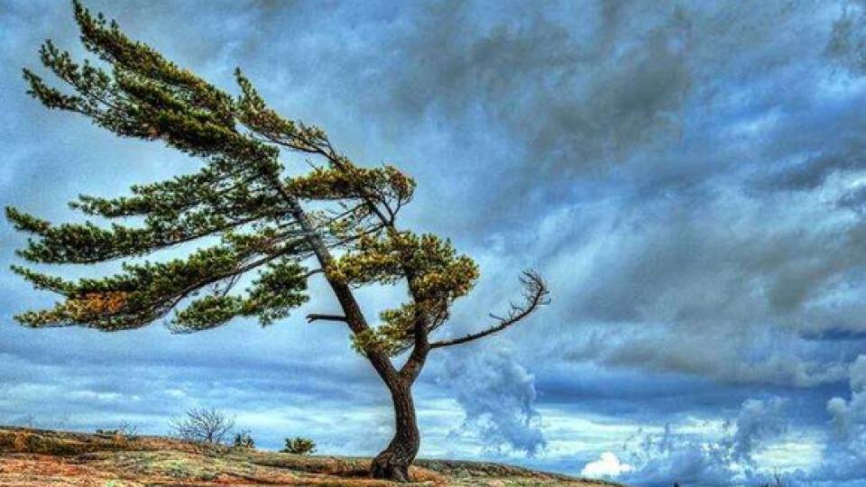 Зливи, грози, сильний вітер.  Якою буде погода найближчими днями?