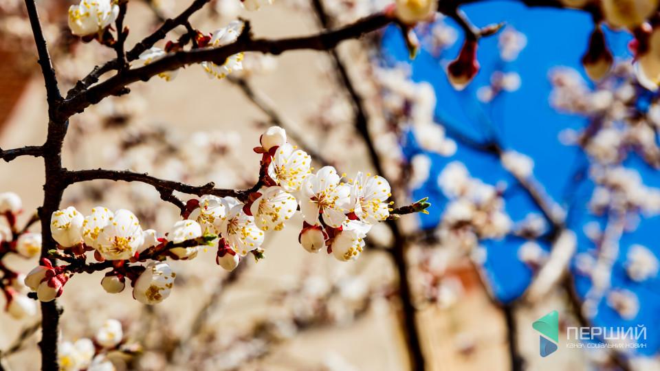 Запахло весною: як розквітає Луцьк. ФОТО
