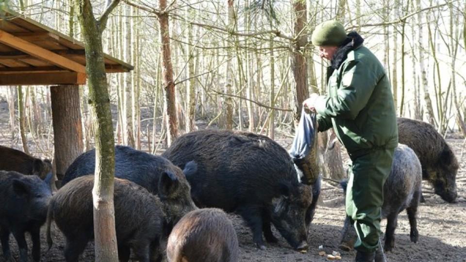 Альтанки, дрова та ручний кабан Федір: як волинські  лісівники «розкручують» зелений туризм. ФОТО