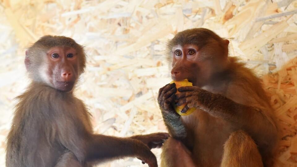 У Луцькому зоопарку з'явились нові мешканці. Фото