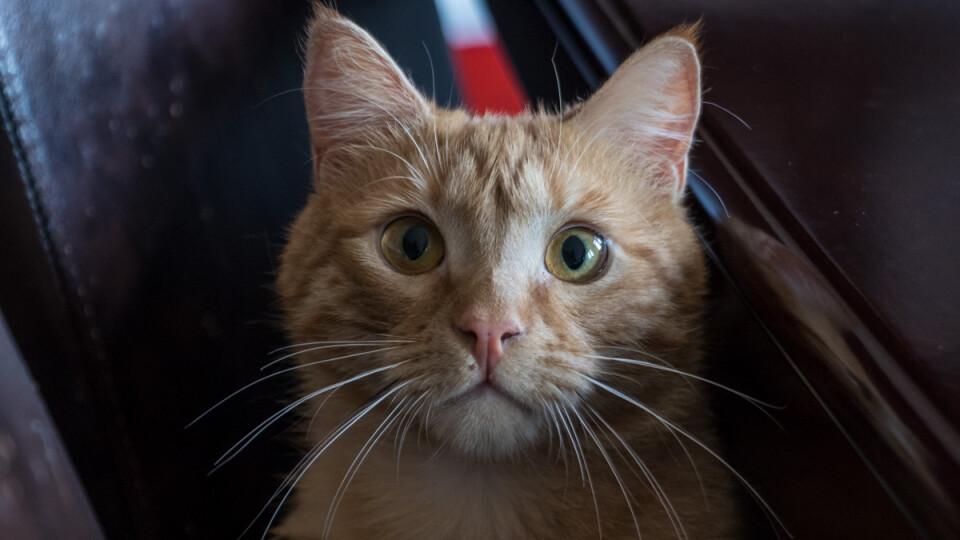 У міськраді Дніпра живе кіт Байден. Він ходить на всі наради та живе у кабінеті заступника мера