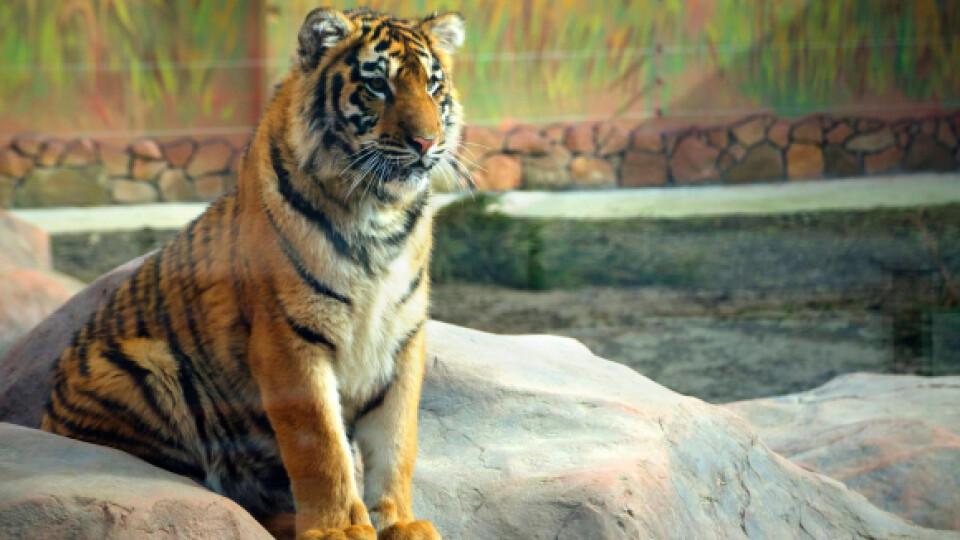 Луцькому зоопарку можуть передати тварин із Національного цирку України