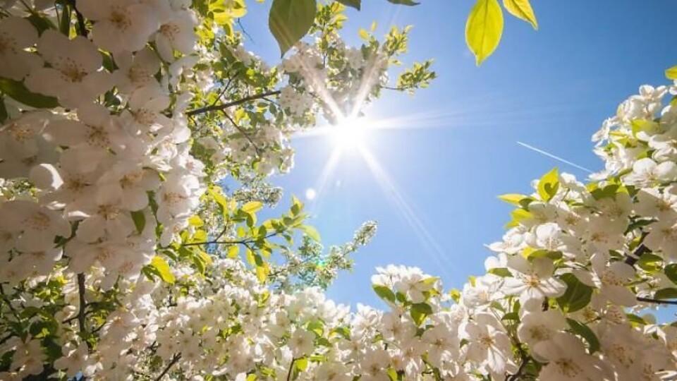 Тепло, але з вітром: якою буде погода в Луцьку у середу, 24 квітня
