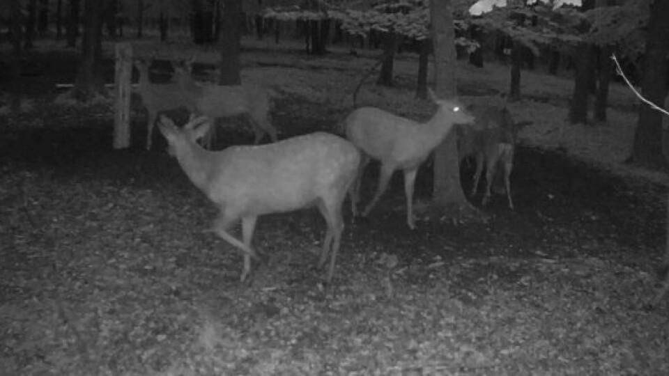 У лісі наВолині встановили камери. Хто «прийшов» на зйомки?