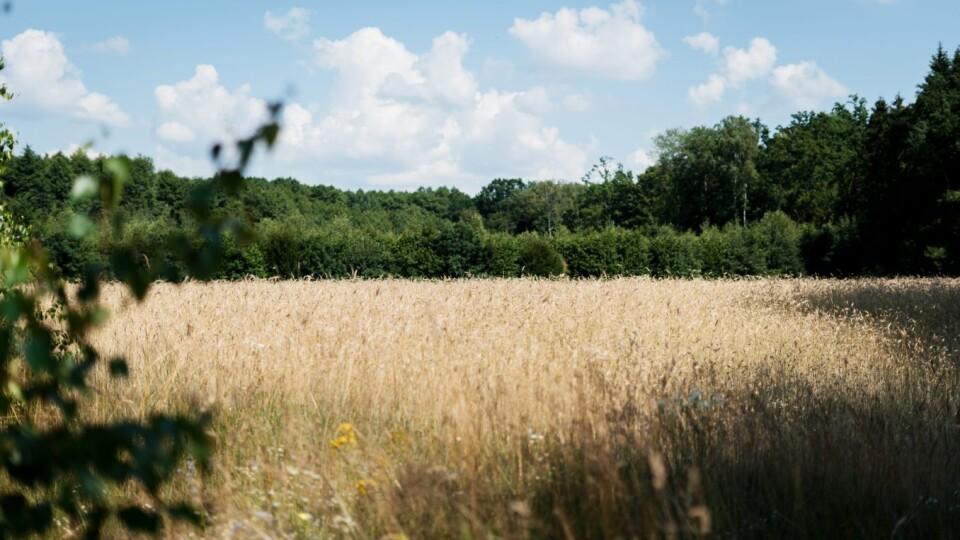На Волині у держлісгоспах створили понад 200 га кормових полів