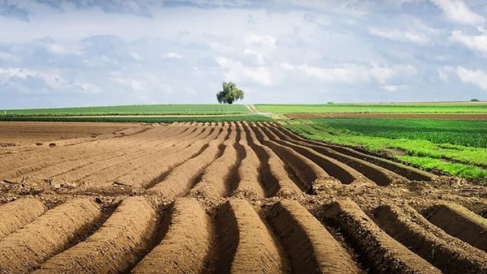 Громади Волині отримають 65 тисяч гектарів сільськогосподарських земель, – Держгеокадастр