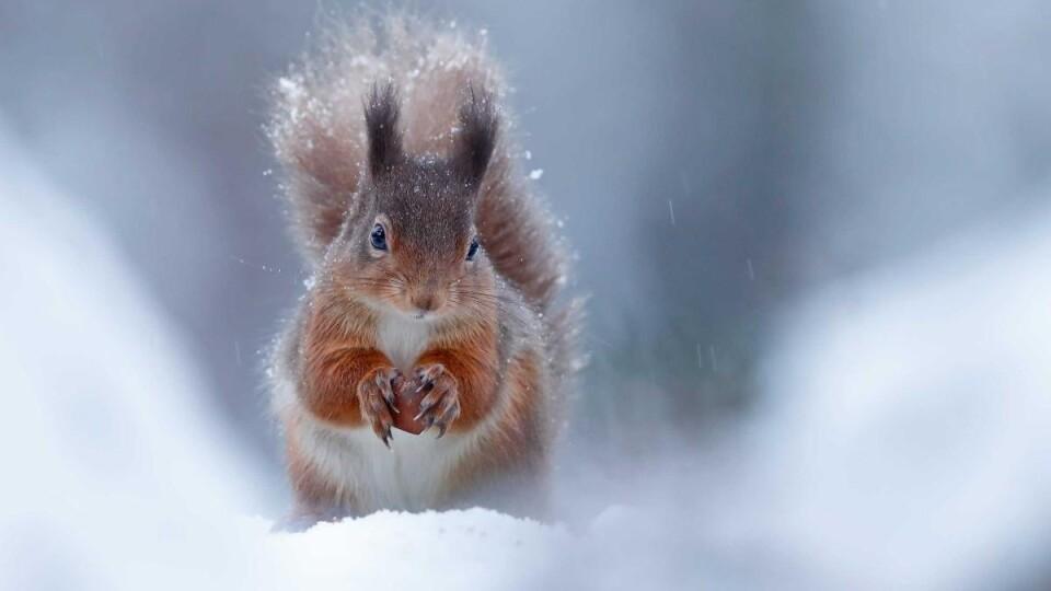 Якою буде зима? Прогноз від волинських синоптиків