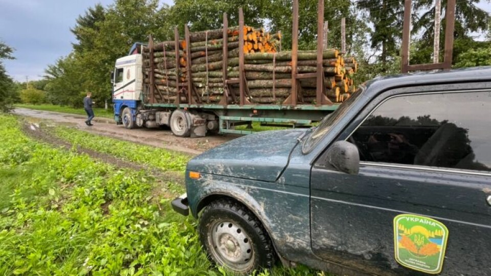 На Волині виявили незаконну вирубку лісу