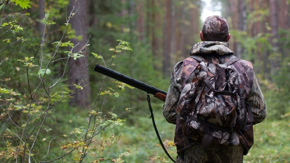 У Шацьку браконьєр вбив козулю