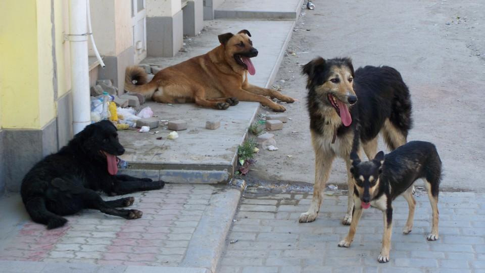 У Луцьку дитину покусав безпритульний собака. ФОТО