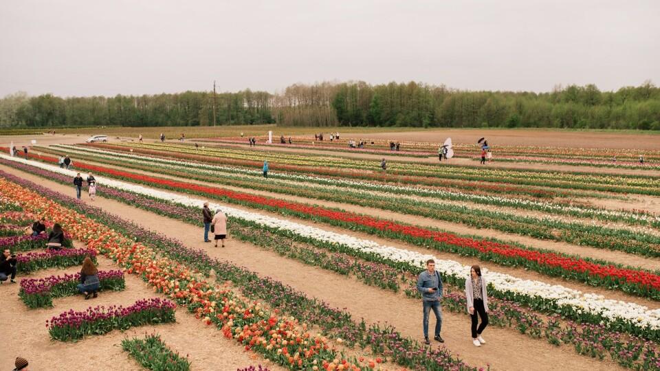 «Волинська Голландія-2021» відбудеться після Великодня