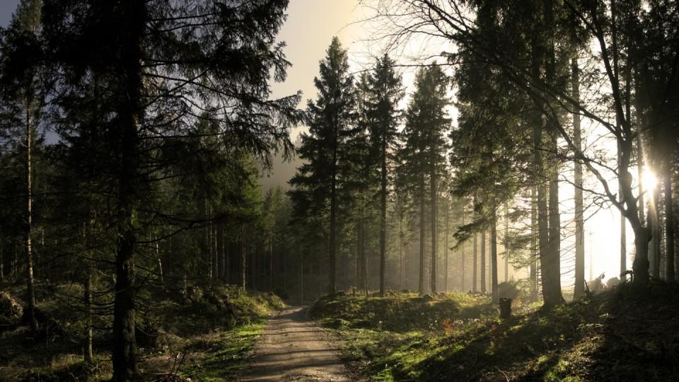 На Волині хочуть посадити понад 350 гектарів лісу.  Кличуть долучатися всіх охочих