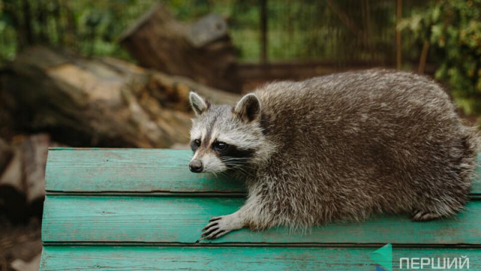 У Луцькому зоопарку влаштовують свято гарбуза. Обіцяють квести, вікторини, показові годівлі