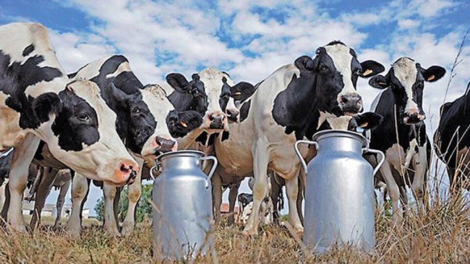 Волинське підприємство — на першому місці у рейтингу «ТОП-10 молочних ферм України»