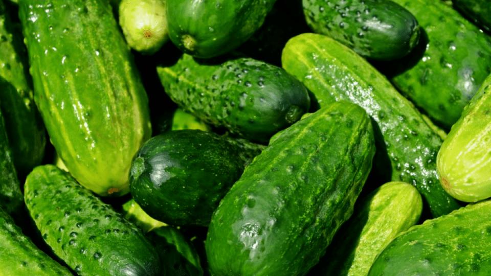 Які хвороби лікують свіжі огірки