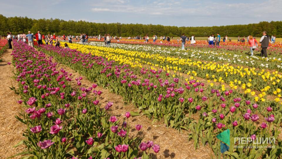 Повідомили дату фестивалю тюльпанів на Волині