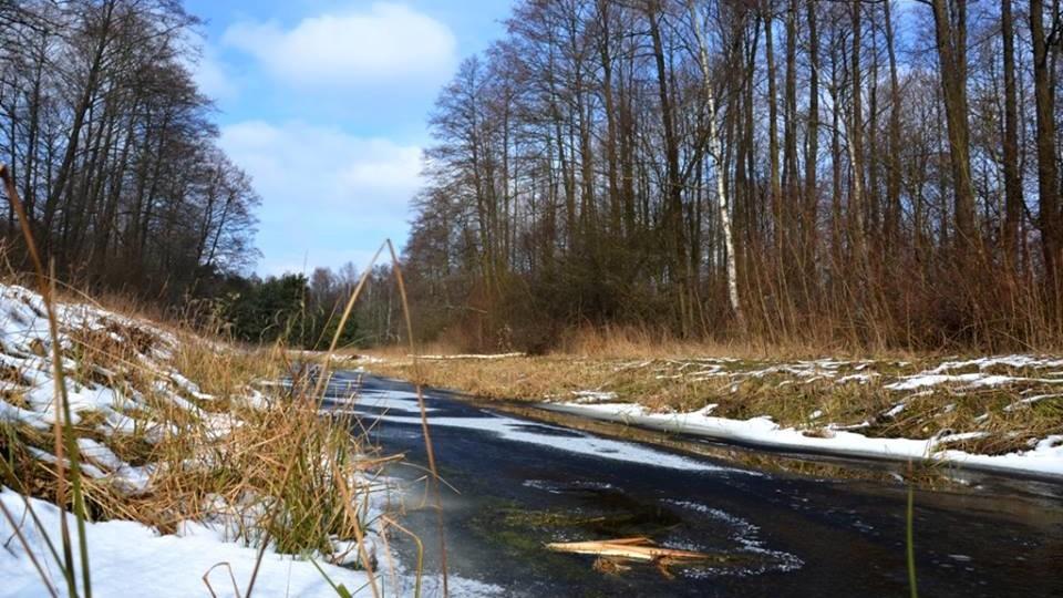 Шацький національний парк опублікував чудові світлини зимової природи. ФОТО