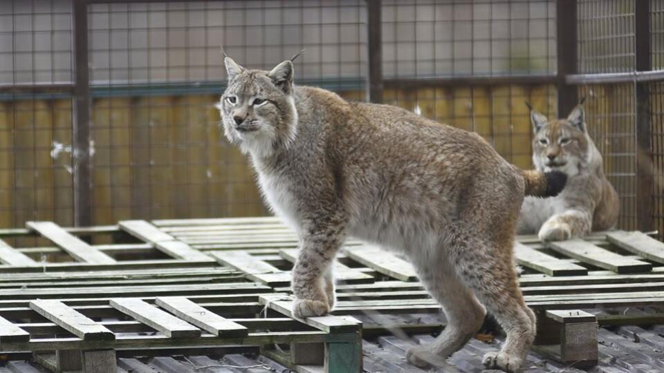 З 12 травня у Луцьку запрацює зоопарк. Як туди пускатимуть