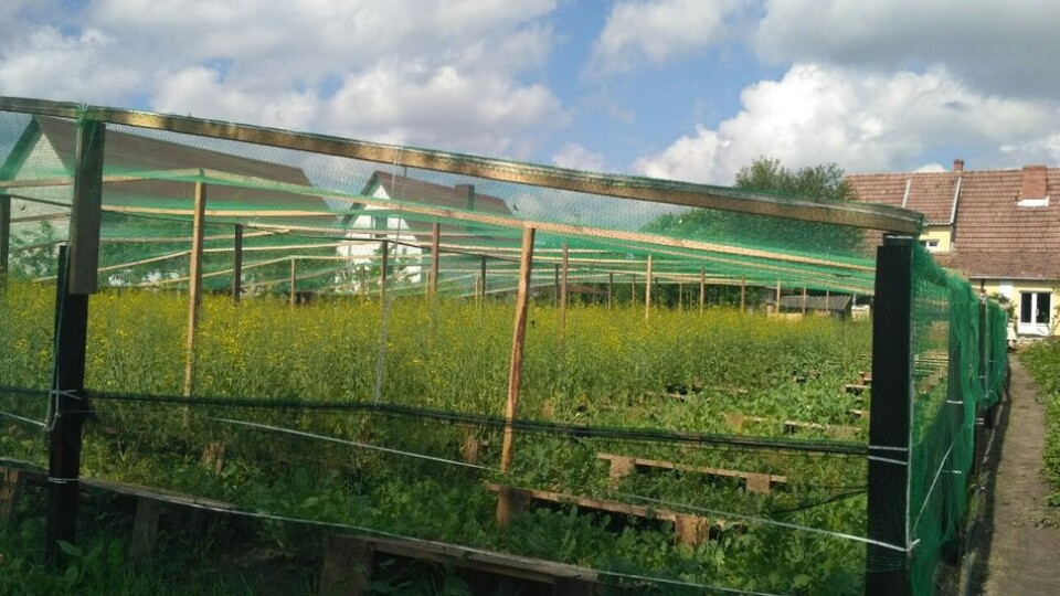 Колишня банкірка створила равликову ферму на Волині