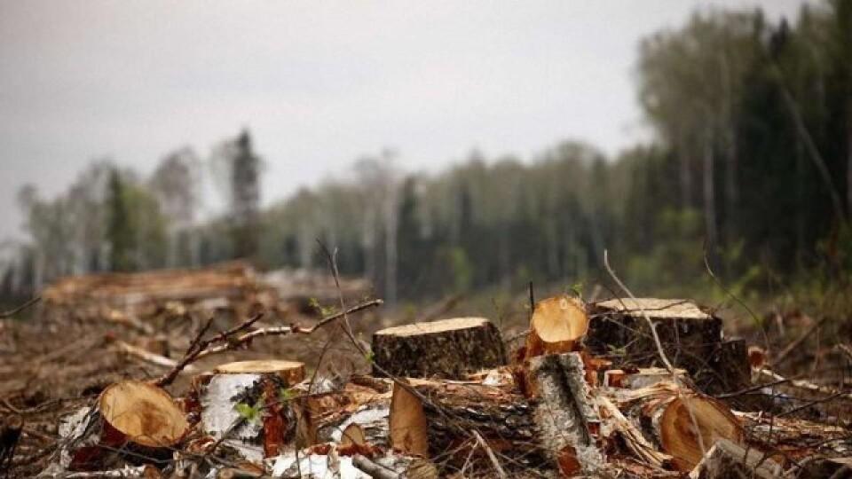 Самовільних рубок на Волині стало менше, – лісівники
