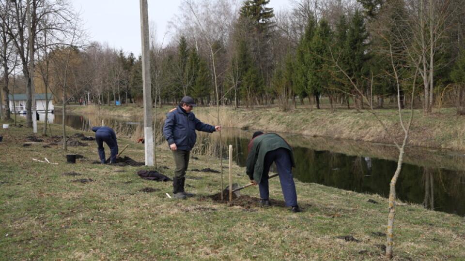У Луцьку в Центральному парку висадили 300 саджанців дерев
