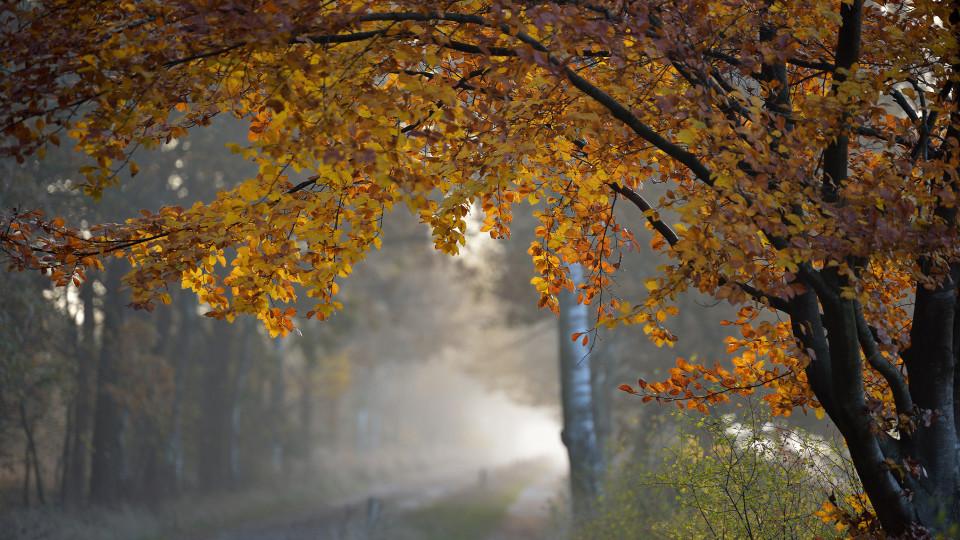 Якою буде погода в Луцьку та області  12 листопада