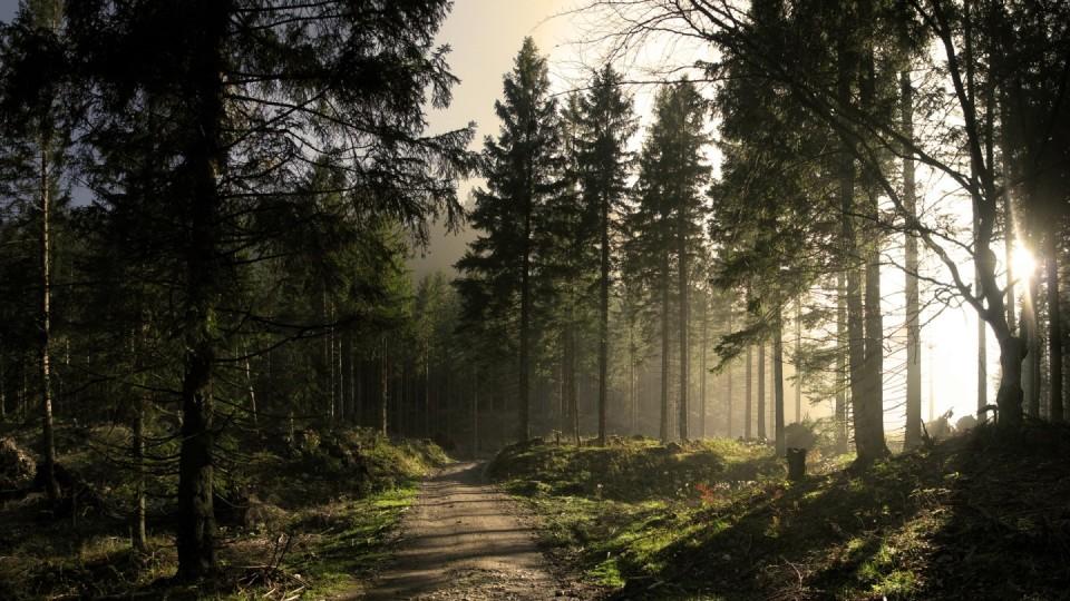 Скільки заробили лісогосподарські підприємства Волині у 2018