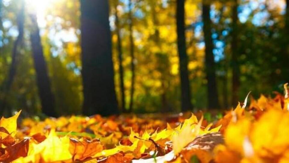 Яку погоду прогнозують синоптики у вересні