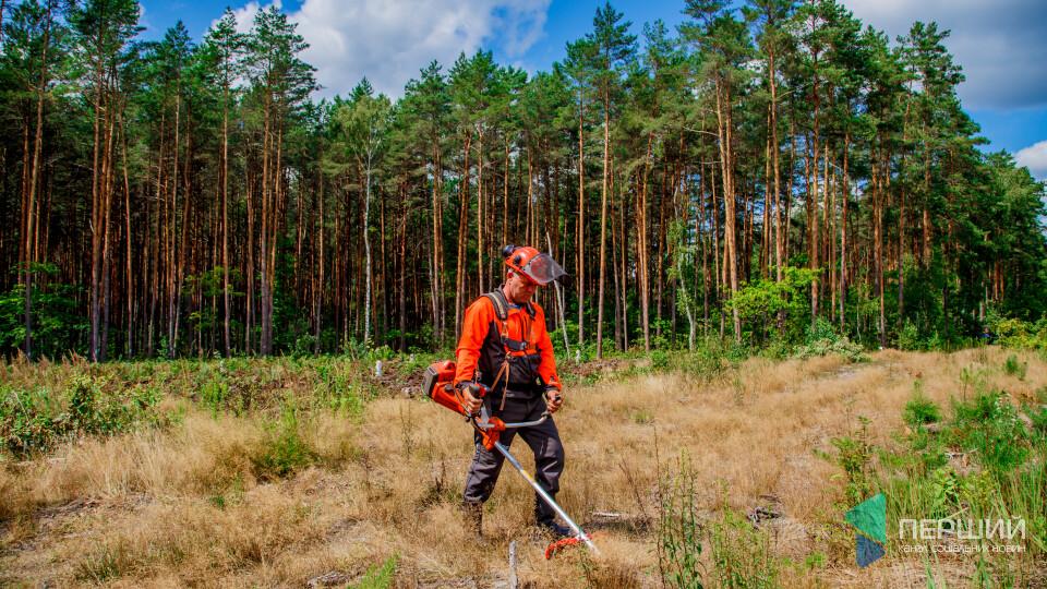 Посадили – доглядаємо: журналісти на Волині не кидають «свій» ліс напризволяще