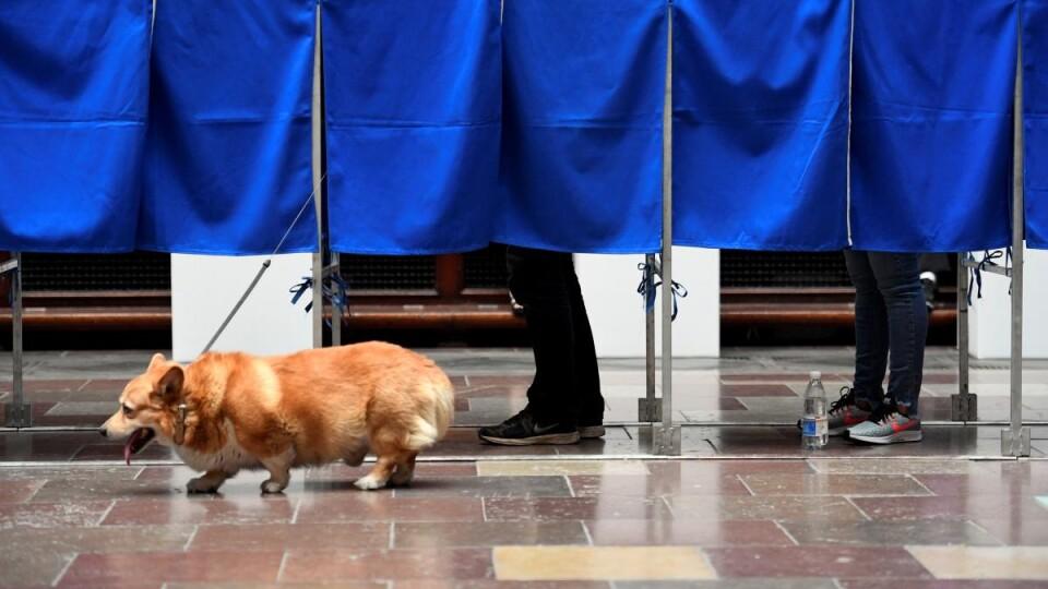 «Я вже проголосував. А ти?»: відомі волиняни закидали соцмережі світлинами з дільниць