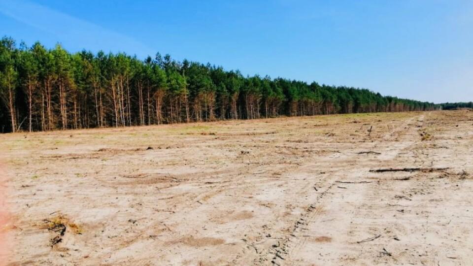«Ситуація є кричущою». На Камінь-Каширщині пошкодили значні площі лісу