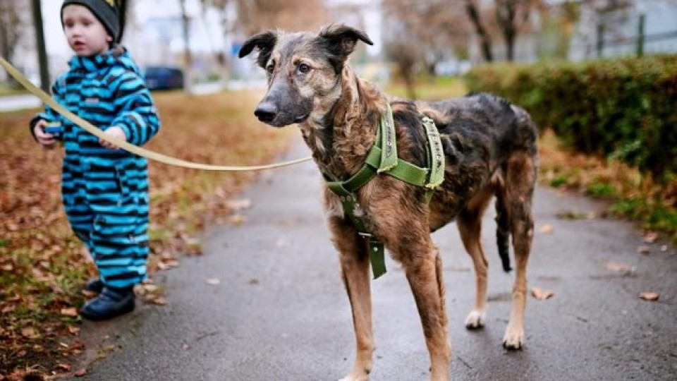 Собаці Беллі, яку півроку тому знайшли виснаженою у Луцьку, досі шукають господаря
